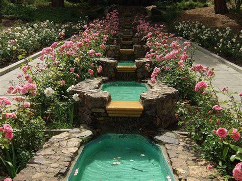 backyard rose gardens morcom rose garden