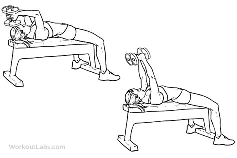 tricep extension bench lying dumbbell tricep extension illustrated exercise guide workoutlabs