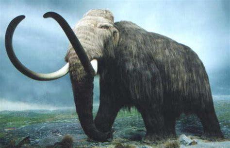 Fosil Gajah Daging jurassic park fosil mammoth