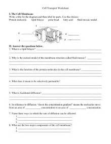 cell membrane coloring worksheet answer key 12 best images of lipid worksheet answers cell membrane