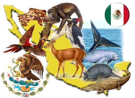 imagenes de animales y plantas de mexico en peligro de extinci 243 n m 225 s de mil especies animales y