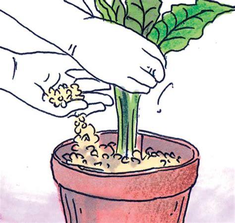 vasi per idrocoltura vasi per idrocoltura fai da te great set pezzi per