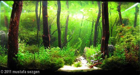 cool aquascapes 2011 aga aquascaping contest 194