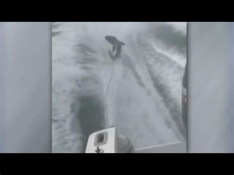 speed boat viral video viral video of high speed boat dragging shark causes