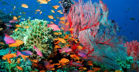 fotobox le immagini dei google street view ci porta a visitare il mondo sottomarino posti da visitare notizie