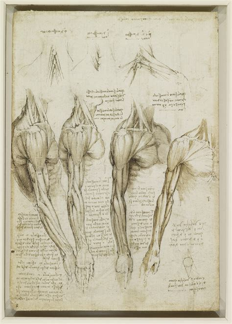 wandlen met arm the muscles of the shoulder arm and neck nen gallery