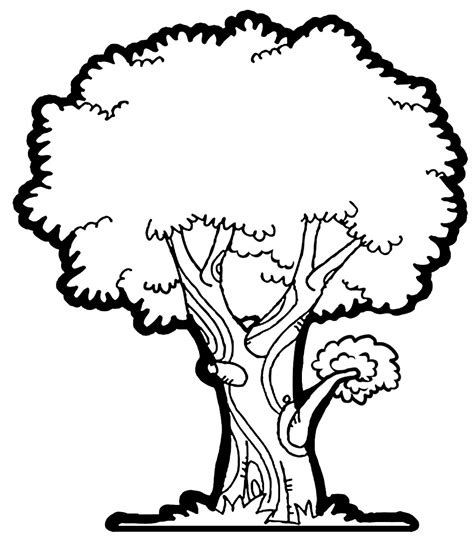 narra tree coloring page mango tree clip art black and white www imgkid com the