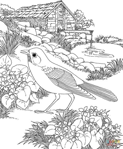 printable coloring pages of birds and flowers american robin and wood violet wisconsin state bird and