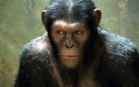 planet of the apes images rise of the planet of the apes wallpapers hd