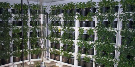 Indoor Plants For Home by Vertical Farming Is This The Future Of Growing Cannabis