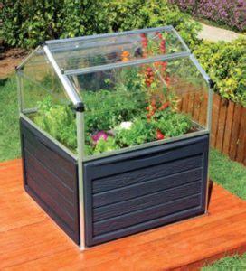 growing herbs   mini greenhouse