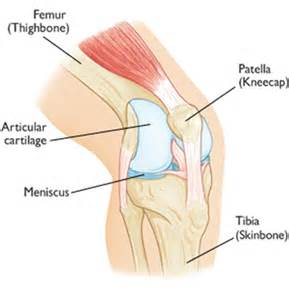 On Interior Of Knee by Anterior Knee Knee And Shoulder Clinic Dr