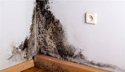 Decorative How To Get Rid Of Black Mold Photos