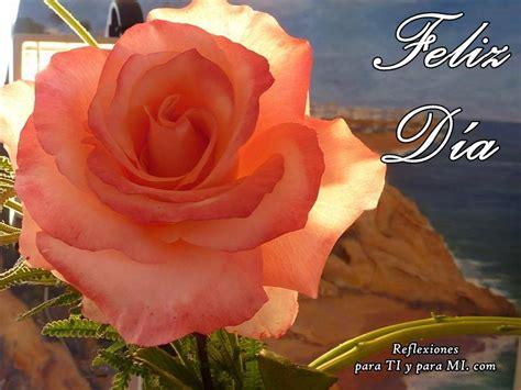 imagenes feliz dia con rosas pin rosa hermosa con gotas lluvia portadas para facebook