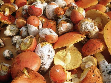cucinare gli ovuli ricette con funghi ovoli