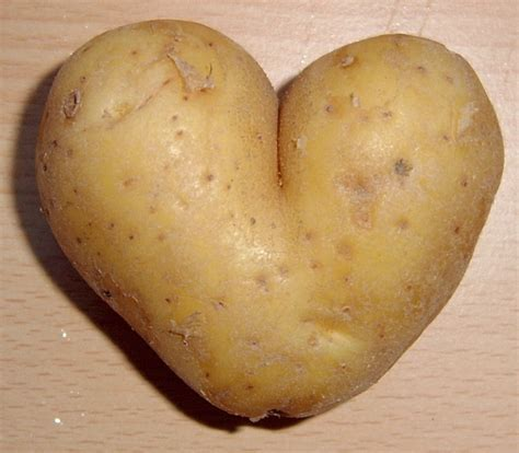 Potato Program by Smart Potatoes To Smarter Fort Worth Weekly