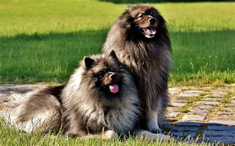 dog grooming grooming different dog breeds tips from a groomer grooming different dog coat types