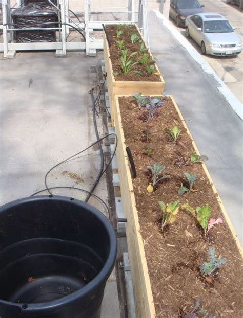 Sub Irrigation Planter by Green Roof Growers A Cedar Sub Irrigated Planter
