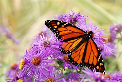 imagenes de mariposas unicas las mariposas m 225 s bonitas el mundo curioso