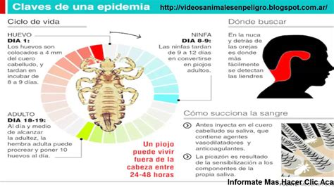 imagenes no realistas con informacion informacion sobre animales piojos alertan por el uso de