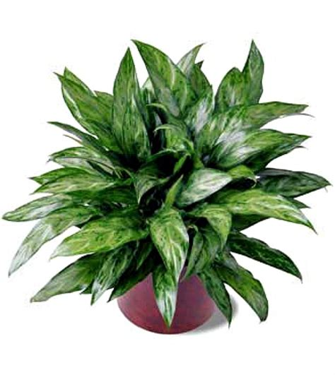 Home Plants by 10 Houseplants That Clean The Air Page 8 Of 11 Sand