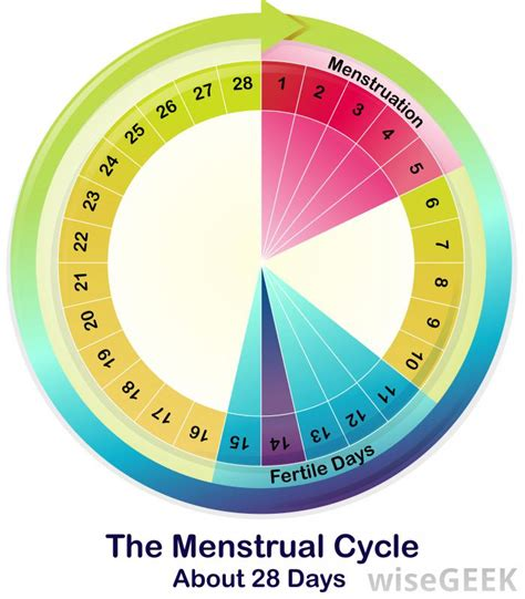 how long does a woman bleed after ac section what is ovulation spotting with pictures