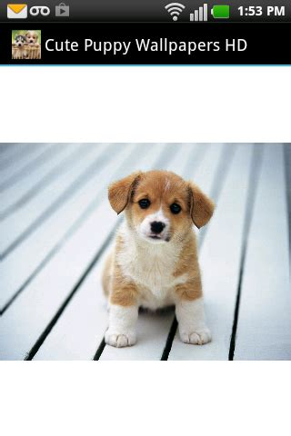 cute puppy android wallpapers for free cute puppy wallpapers hd android apps on google play