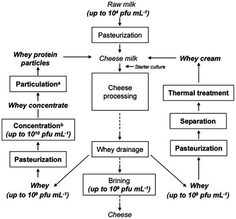 how cheese is made flowchart figure 3 flow chart of a cheese process in which