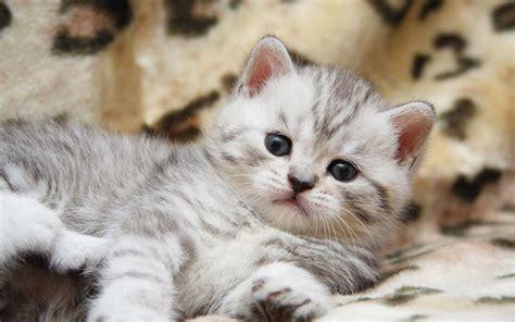 beautiful kittens muhammad nouman ali sheroz awais iqbal talha mohsin riaz