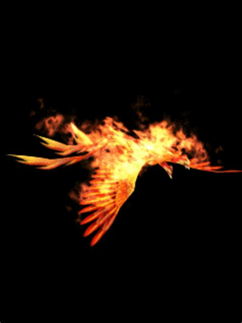 gif wallpaper for mobile 240x320 free download download flying burning bird wallpaper mobile wallpaper