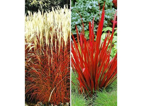 Lidl Garten Pflanzen by Rote Gr 228 Ser Kollektion 4 Pflanzen Lidl Deutschland Lidl De