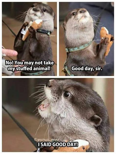 Funny Animals Memes - 20 funny animal jokes and memes quotes and humor