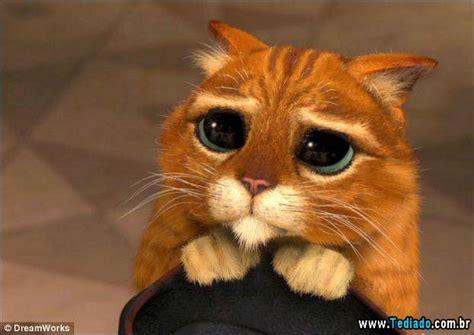imagenes gatos tristes gatos tristes 13 fotos blog tediado