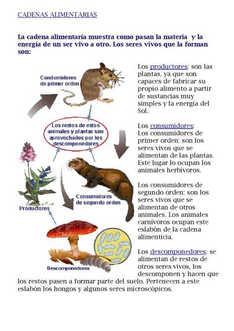 cadenas alimentarias guia file cadenas alimentarias sandra orellano hipertextos pdf