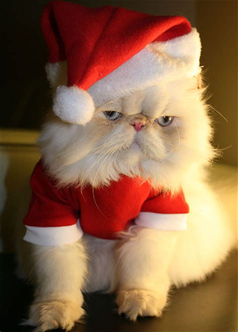 funny animals funny christmas animal