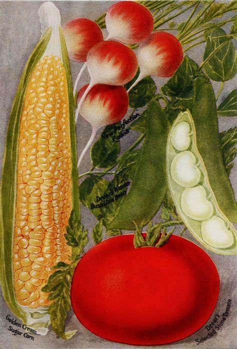 1910 Henry A Dreer Vegetable Seed Catalog Illustrations Vegetable Garden Catalogs