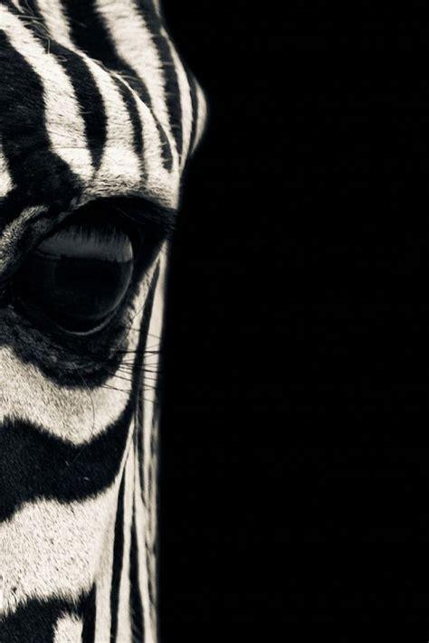 zebra iphone wallpapers  wallpapergetcom