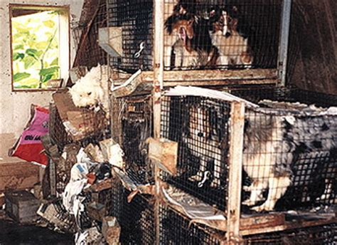 report puppy mill puppy mill awareness of se michigan