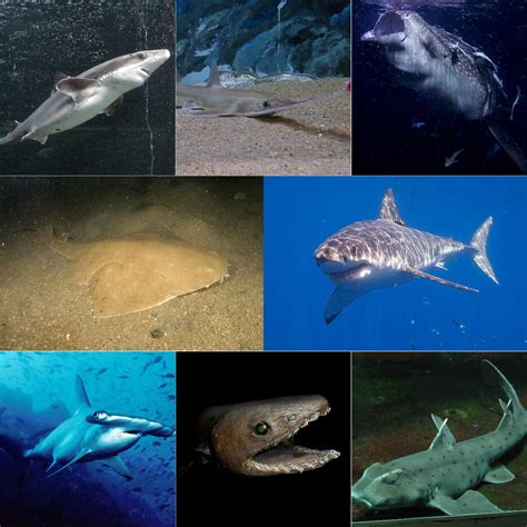 what color are sharks shark