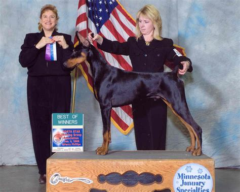 mystis salon in memphis memphis dobermans show dogs rio grooming school and