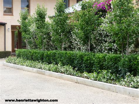 Hedging Ideas For Gardens Ornamental Pear With Lilipilly Hedge And