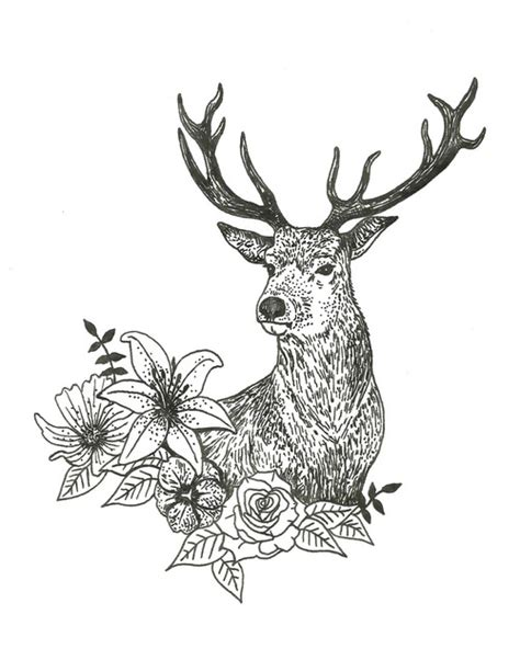 deer drawing www pixshark com images galleries