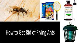 how to get rid of tiny ants in the kitchen delectable best