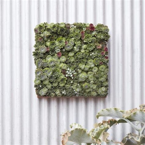modular succulent living wall panel succulent vertical