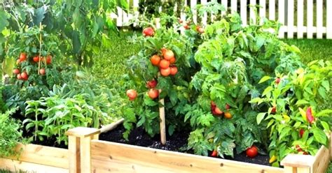 How A Fruit And Vegetable Garden Be Made Beautiful With Fruit And Vegetable Garden