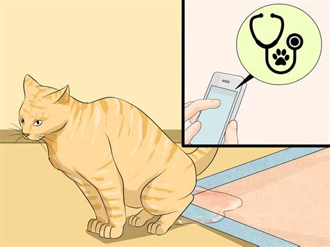 how to litter box a 3 ways to clean a litter box wikihow