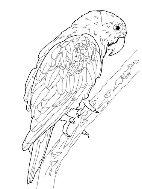 Macaw Coloring Page free printable parrot coloring pages for