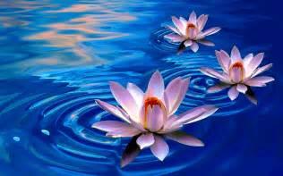 Lotus Flower High Kundalini Julie