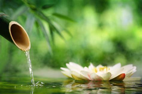 Imagenes Terapias Naturales | terapias naturales complementarias centre de psicologia