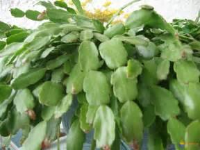 photo cactus de p 226 ques